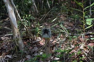 Tarantula turf