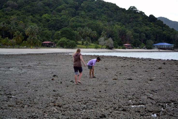 Clam hunting for dinner - Wild Pasir Panjang beach