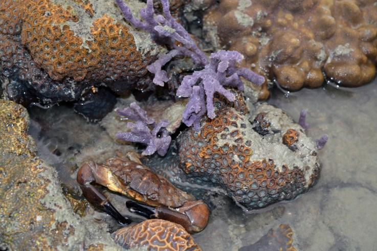 Corals - Tuba Island