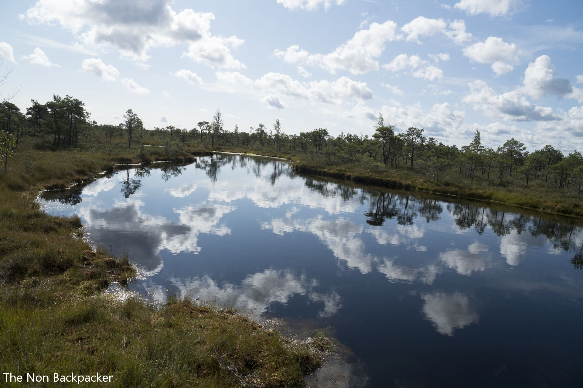 Latvian Bog Pools