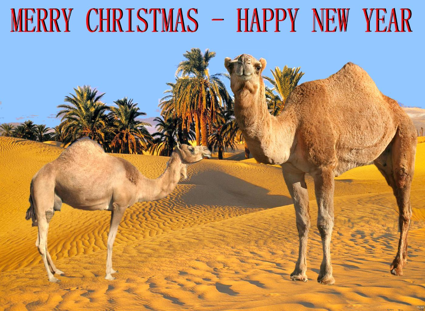 Merry Christmas Happy New Year The Non Conformers