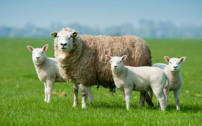 Organic Wool Bedding and Baby Wear