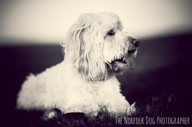 The-Norfolk-Dog-Photographer-0007
