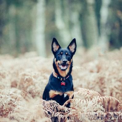 The-Norfolk-Dog-Photographer-0007