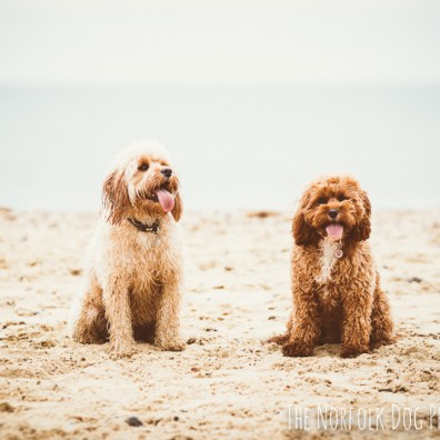 The-Norfolk-Dog-Photographer-0014