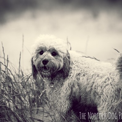 The-Norfolk-Dog-Photographer-0025