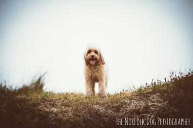 The-Norfolk-Dog-Photographer-0036