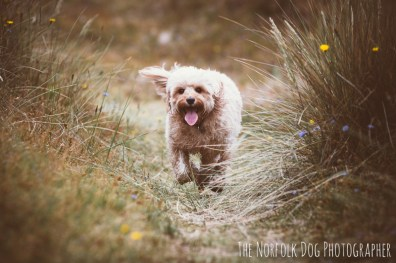 The-Norfolk-Dog-Photographer-0041