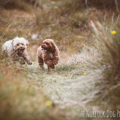 The-Norfolk-Dog-Photographer-0042