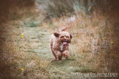 The-Norfolk-Dog-Photographer-0045