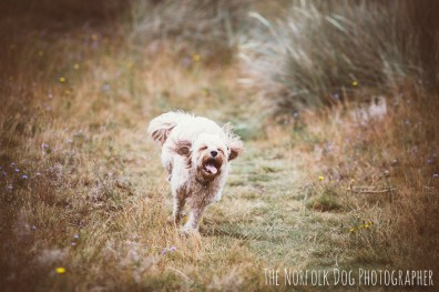 The-Norfolk-Dog-Photographer-0046