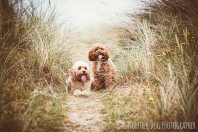 The-Norfolk-Dog-Photographer-0049