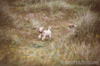 The-Norfolk-Dog-Photographer-0057