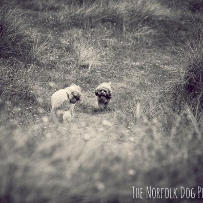 The-Norfolk-Dog-Photographer-0058