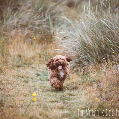 The-Norfolk-Dog-Photographer-0044.2