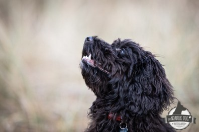 The-Norfolk-Dog-Photographer-0047