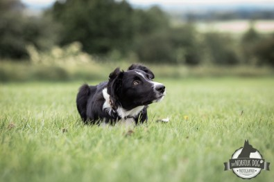 The-Norfolk-Dog-Photographer-0005