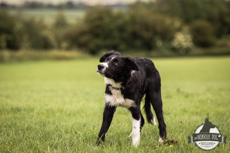 The-Norfolk-Dog-Photographer-0011