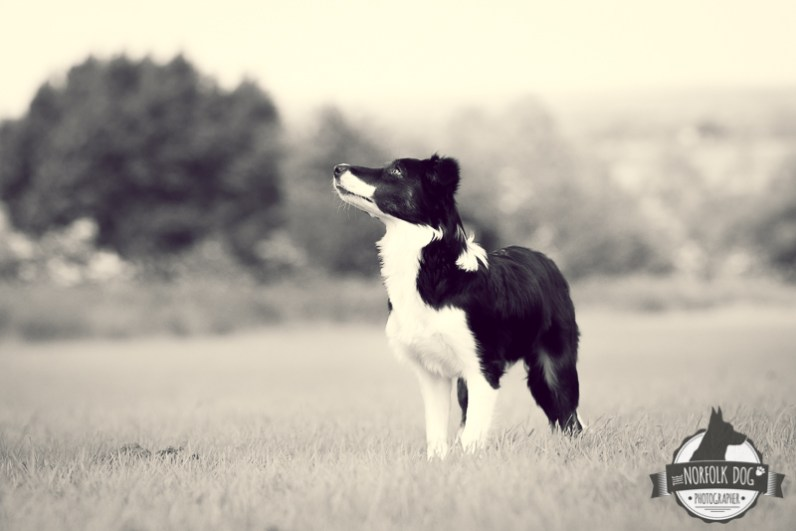 The-Norfolk-Dog-Photographer-0022