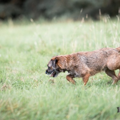 The-Norfolk-Dog-Photographer-0076