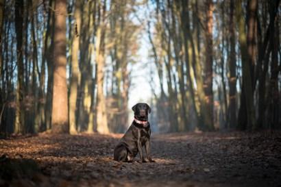 The-Norfolk-Dog-Photographer-0013