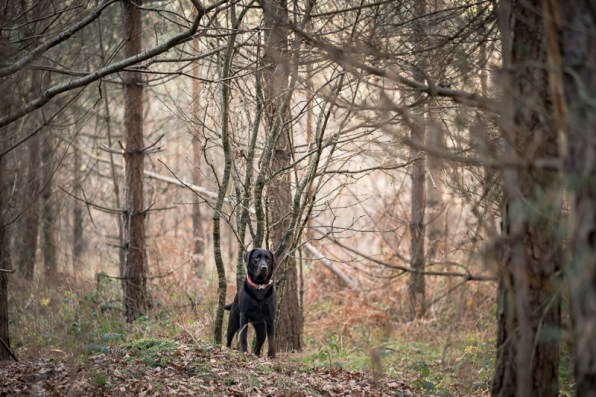 The-Norfolk-Dog-Photographer-0025