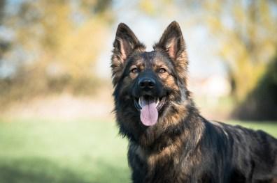 The-Norfolk-Dog-Photographer-0017