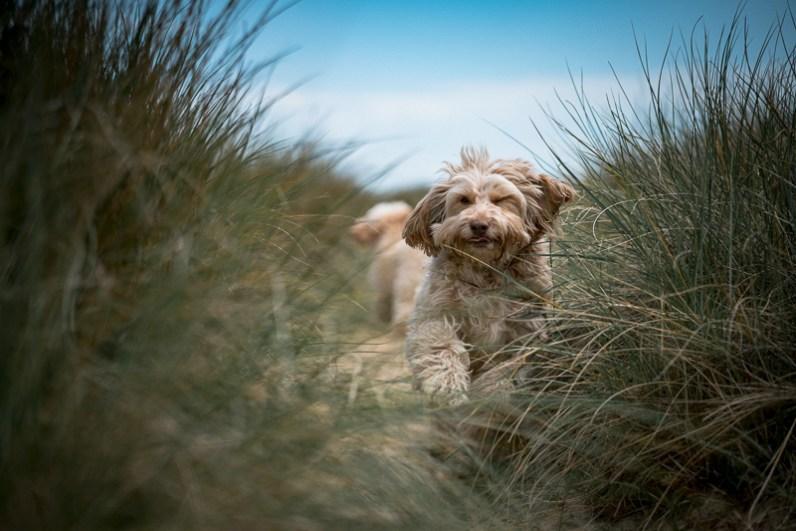 The-Norfolk-Dog-Photographer-0002