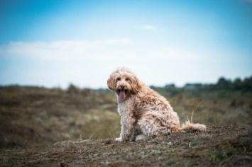 The-Norfolk-Dog-Photographer-0011