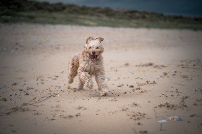 The-Norfolk-Dog-Photographer-0022