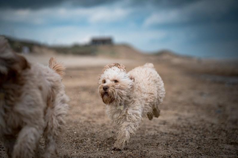 The-Norfolk-Dog-Photographer-0028