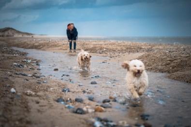The-Norfolk-Dog-Photographer-0029