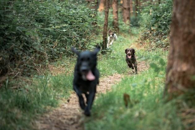 The-Norfolk-Dog-Photographer-0019