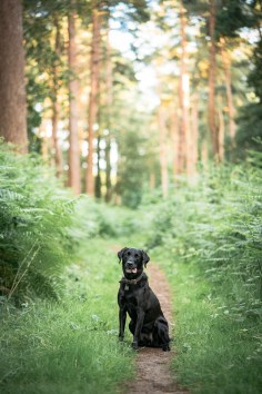 The-Norfolk-Dog-Photographer-0038