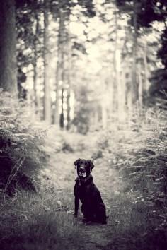 The-Norfolk-Dog-Photographer-0039