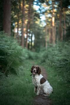 The-Norfolk-Dog-Photographer-0040
