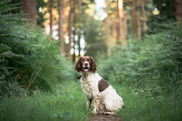 The-Norfolk-Dog-Photographer-0041