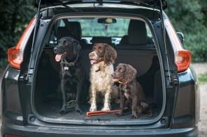 The-Norfolk-Dog-Photographer-0050