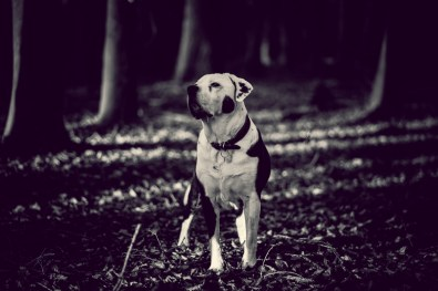 The-Norfolk-Dog-Photographer-0002