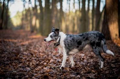 The-Norfolk-Dog-Photographer-0015
