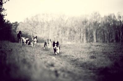 The-Norfolk-Dog-Photographer-0031