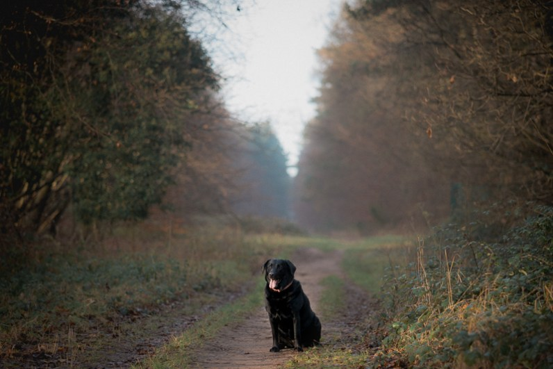 The-Norfolk-Dog-Photographer-0001