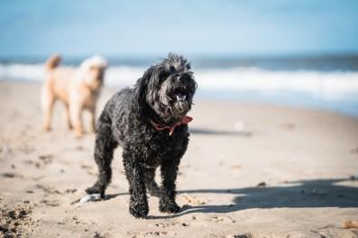 The-Norfolk-Dog-Photographer-0030