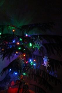 The Norfolk Island pine tree.