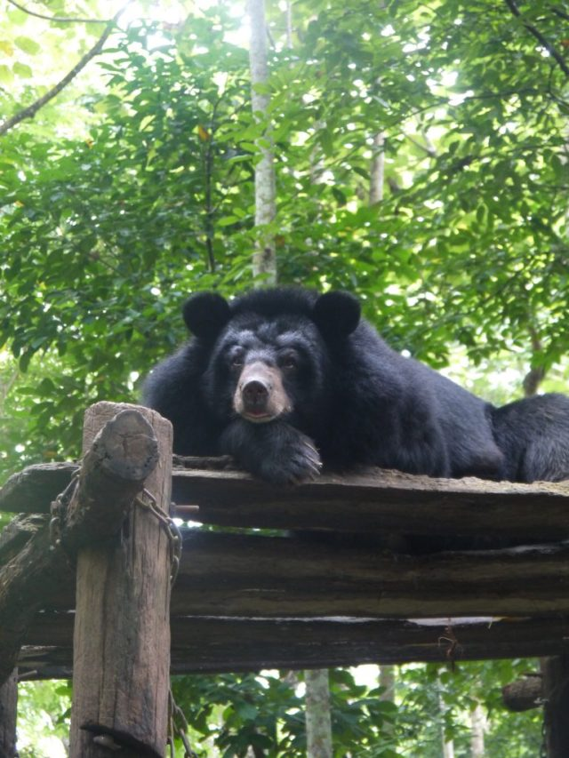 how to do the Kuang Si Falls in Luang Prabang bear sanctuary