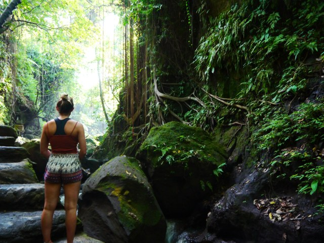 the amazing monkey sanctuary in bali