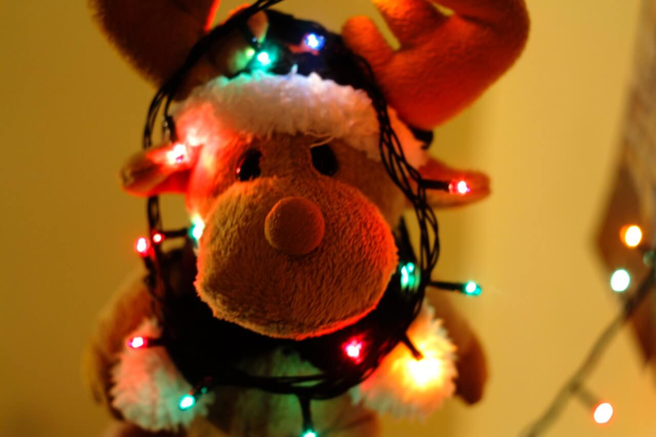 Reindeer with Christmas lights around its face