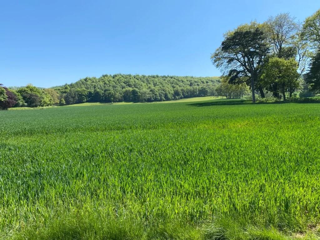 Open Fields Guisbrough Woods