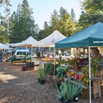 The North Star House Grass Valley Growers Market