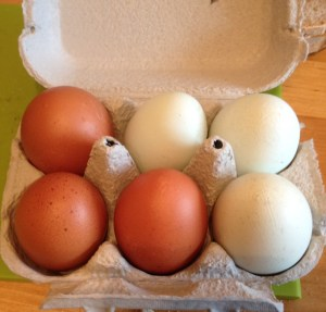 My eggs from Welbeck Farm Shop